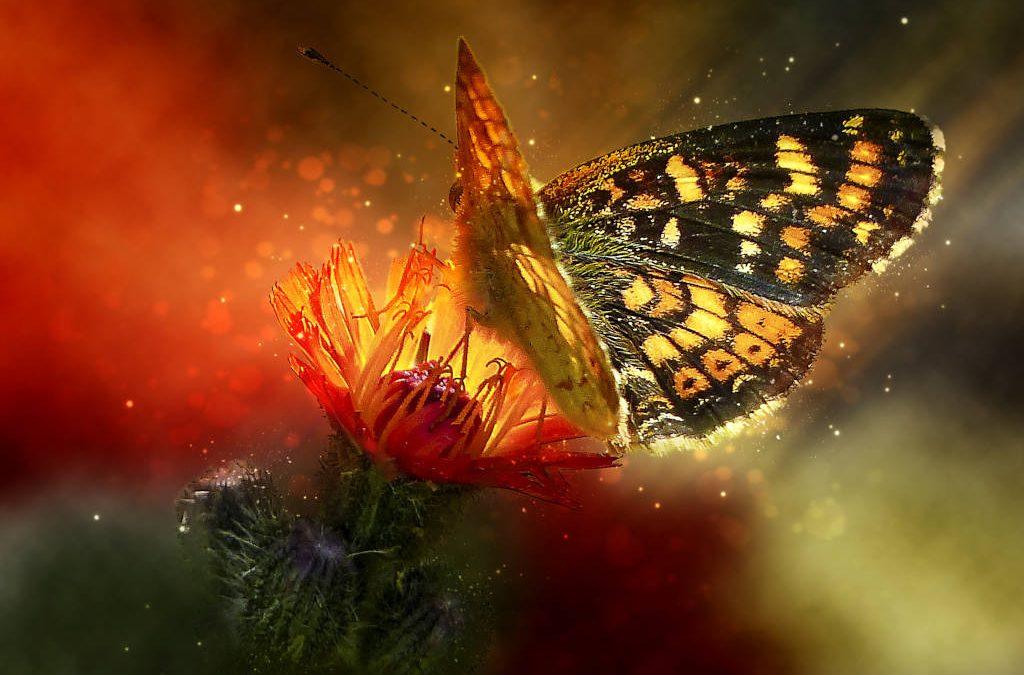 La farfalla in home page: perché?