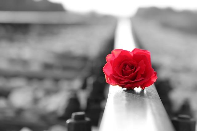 Rosa rossa sul binario